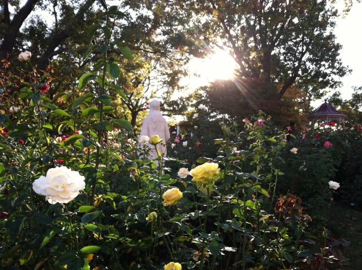 Belmont's Rose Garden.